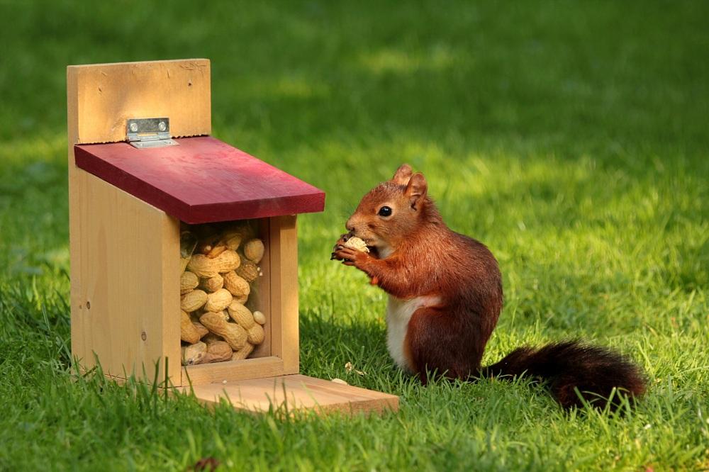 animal-squirrel-sciurus-bird
